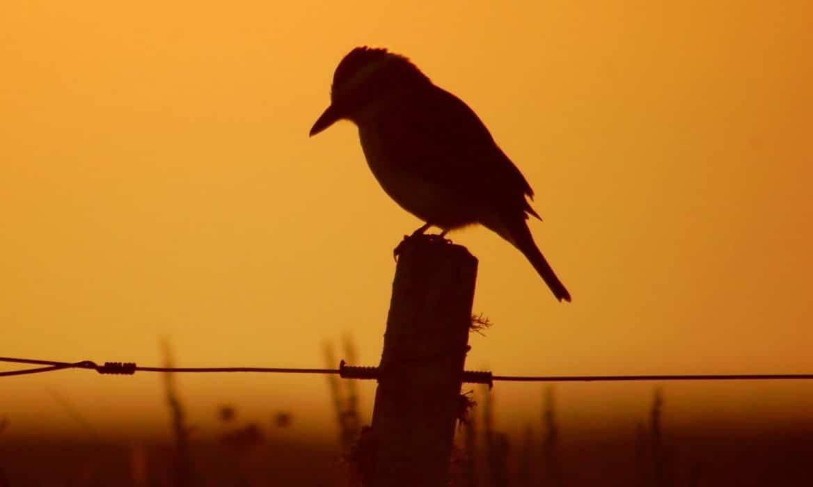 Pájaro al amanecer