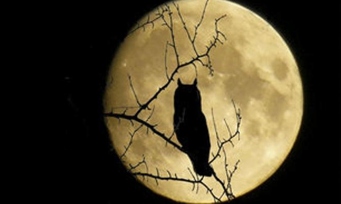 Visitas nocturnas