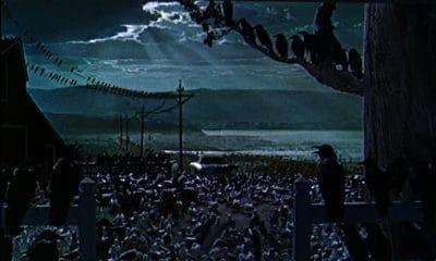 """""""Los pájaros"""" Alfred Hitchcock"""