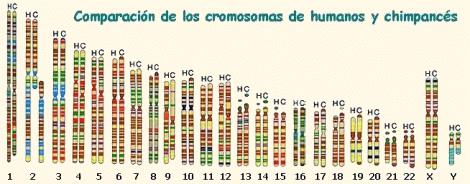 Comparación de cromosomas