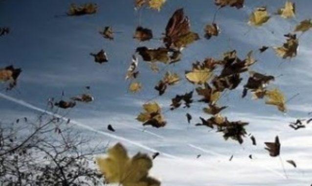 ¿Somos hojas al viento?