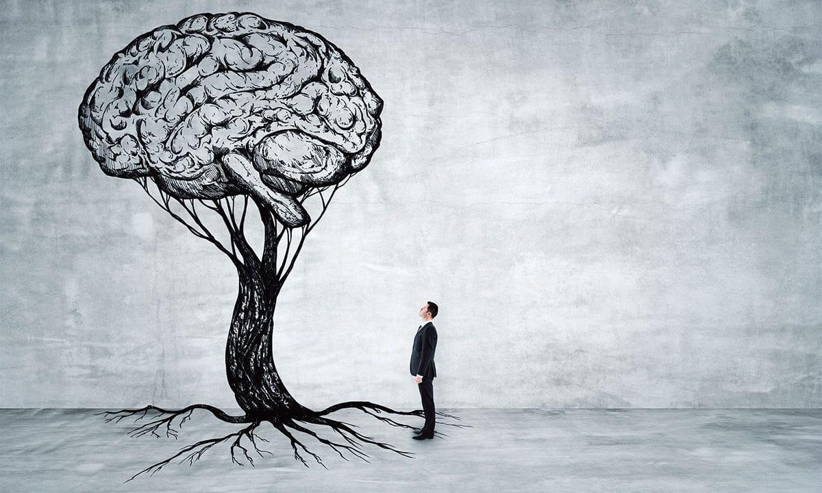 Paleoencéfalo: el cerebro que cambia